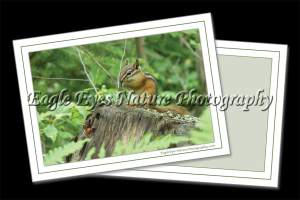 Nature Photo Cards