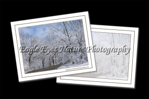 View 4 x 5 Nature Photo Cards